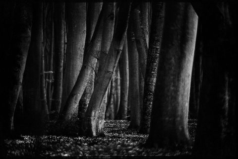 In the Woods © Nicolas Bruant