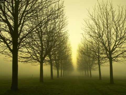 Winter Fog, Cole Park © Adrian Houston