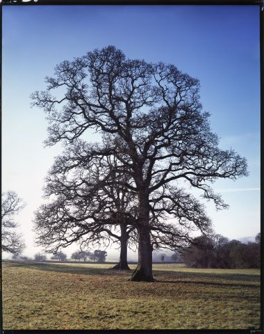 Broadhempston Oaks © Simon Upton