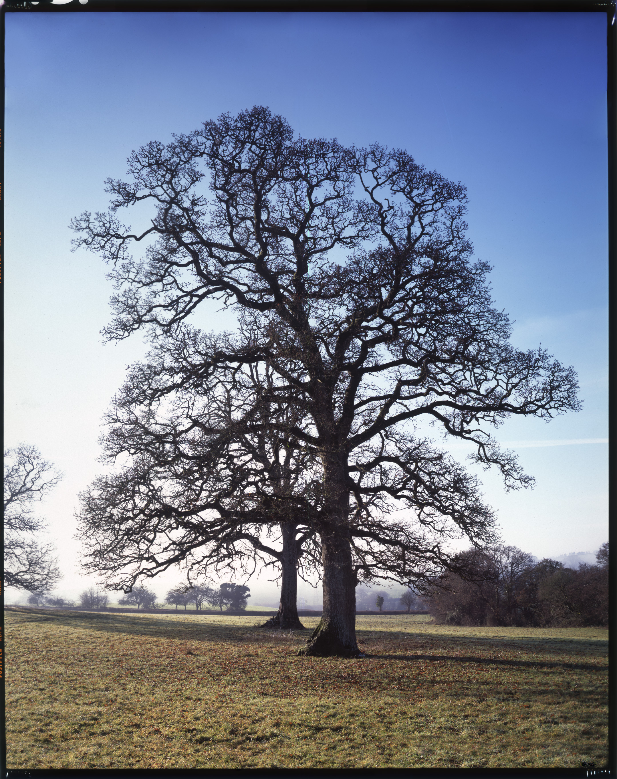 "Broadhempston Oaks    £700.00    Hahnemuhle Photo Silk Baryta fine art print, signed limited edition of 10    Size: 19"" x 15"""