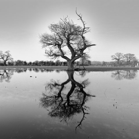 Oak and Reflection © John Melville