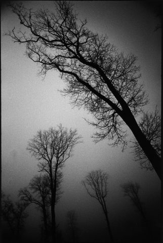 Trees in the Rain © Nicolas Bruant
